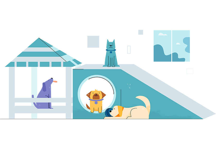 pet-daycare-camps